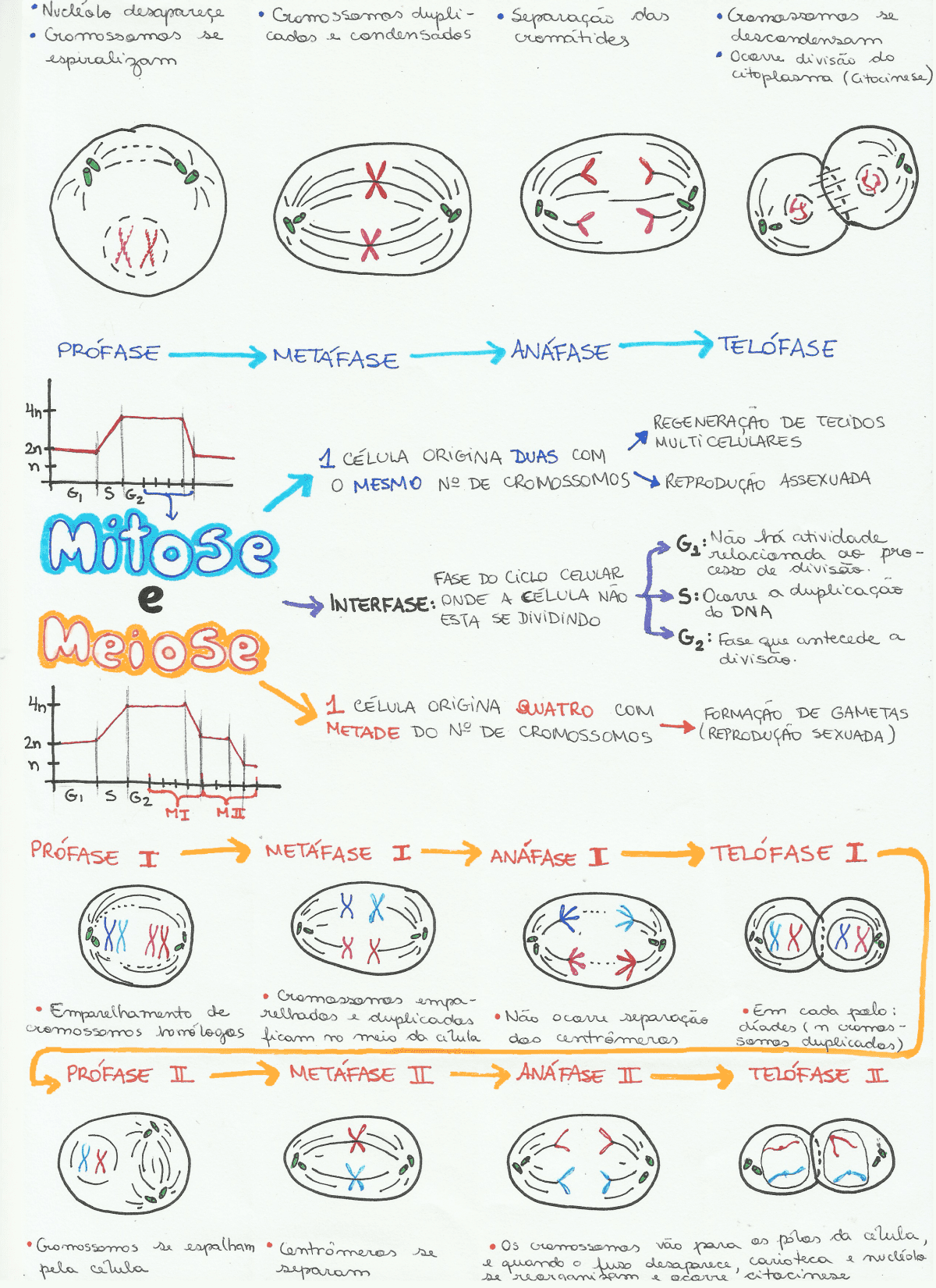 Mapa Mental: Mitose e Meiose